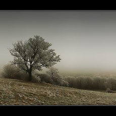 Fotografie - silent winter