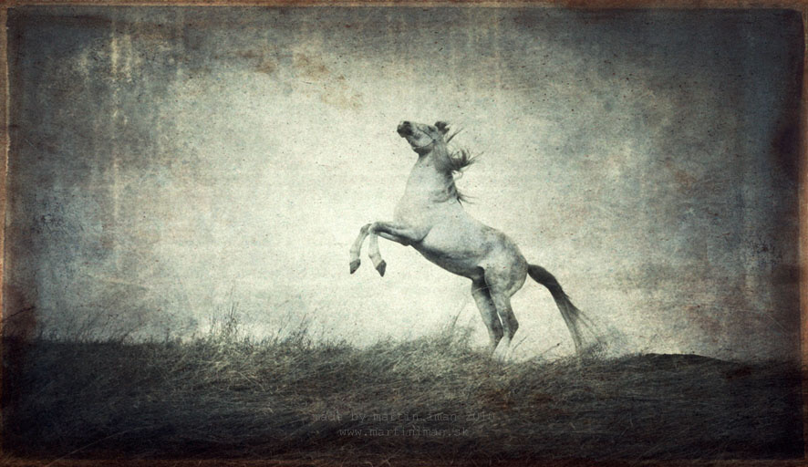 Horses by martin iman - Fotografie - martiniman