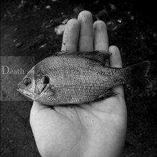 Fotografie - In fishes mind about the death 2/2
