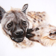 Graphics - hyena