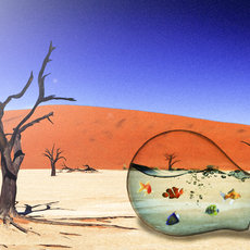 Grafika - Aquarium in the desert...