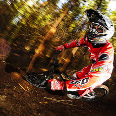 Fotografie - -First spring DH-